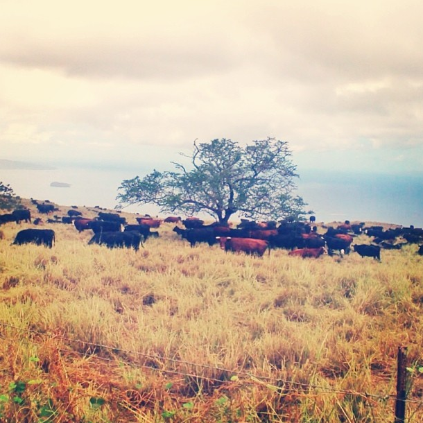 Maui in Instagram by Trevor Morrow (trevormorrowtravel.com)