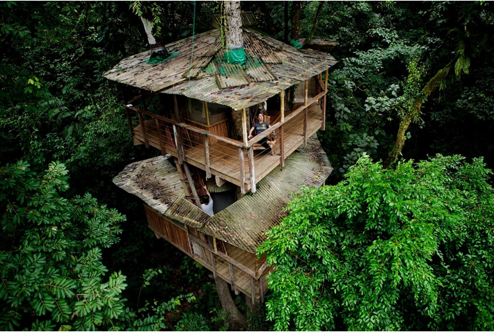 Best Jungle Hotels