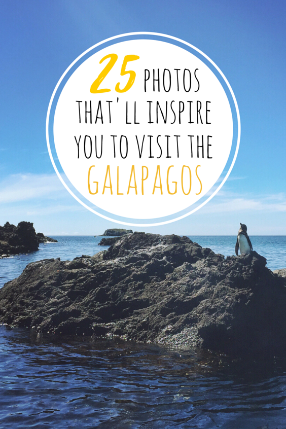 Things To Do In The Galapagos