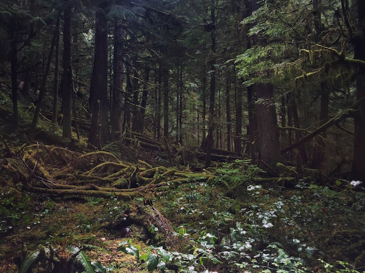 Things to do Olympic Peninsula