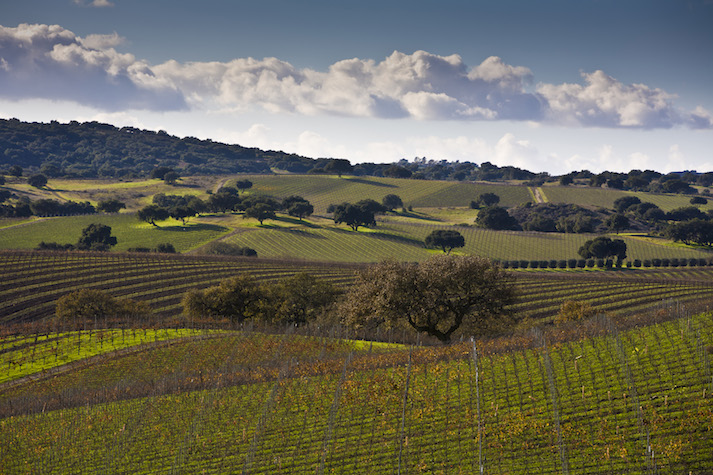Santa Ynez Valley Best Time Of Year